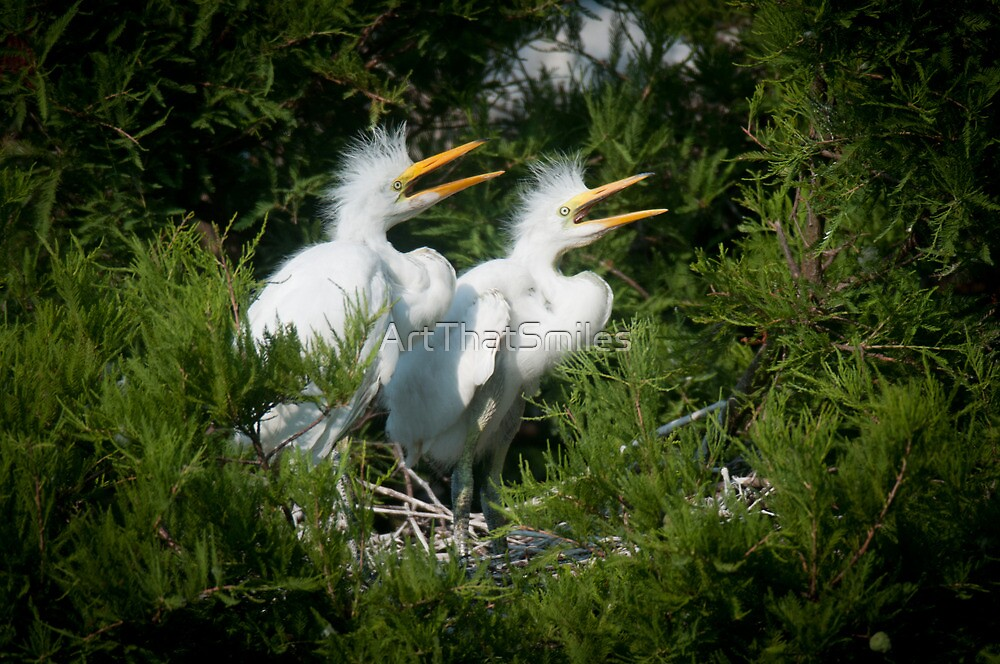 Young Great Egrets call out from nest by ArtThatSmiles