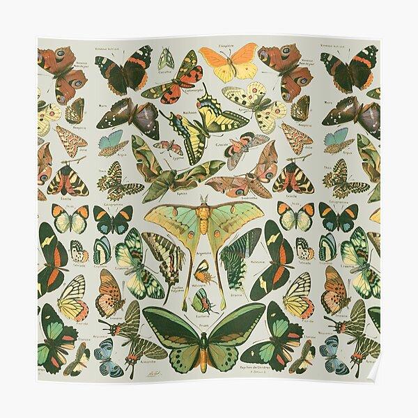 Butterfly Pattern Poster