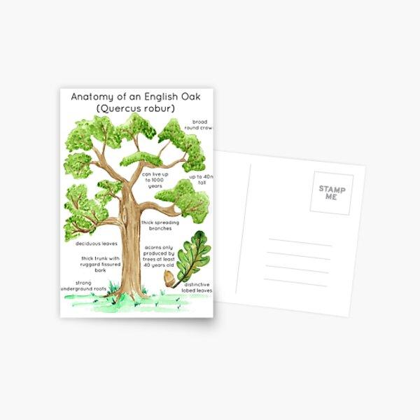 Anatomy of an English Oak Postcard