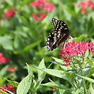 Butterfly on a summer day by Elspeth  McClanahan