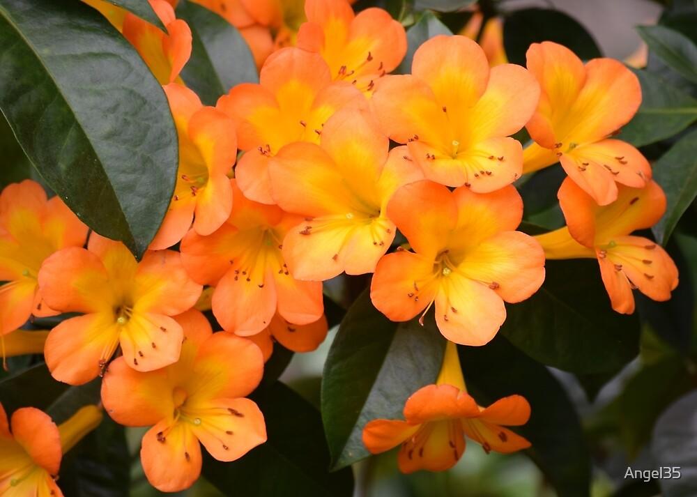 Flowers by Angel35