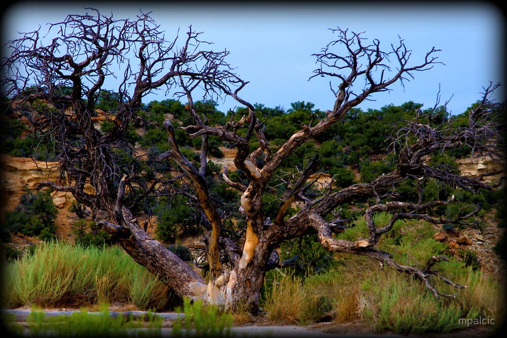 Ancient Tree by mpalcic
