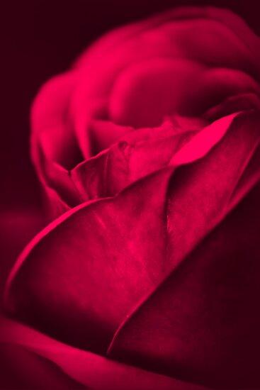 Wake (Rose) by Jessica Loftus