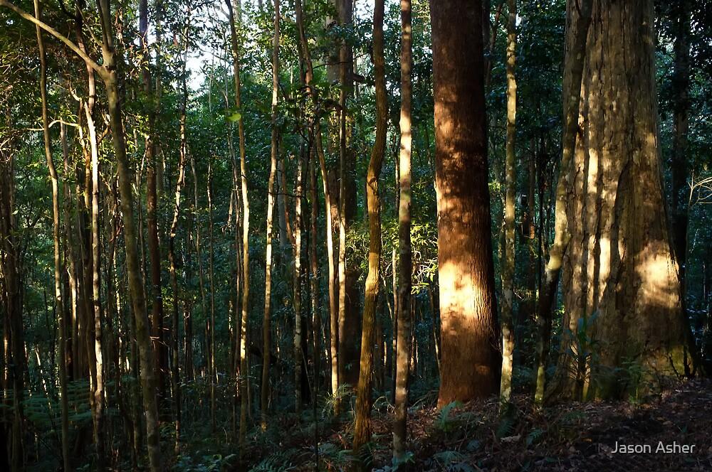 Awakening the Forest by Jason Asher