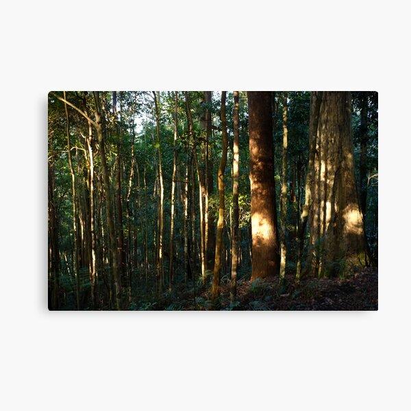 Awakening the Forest Canvas Print
