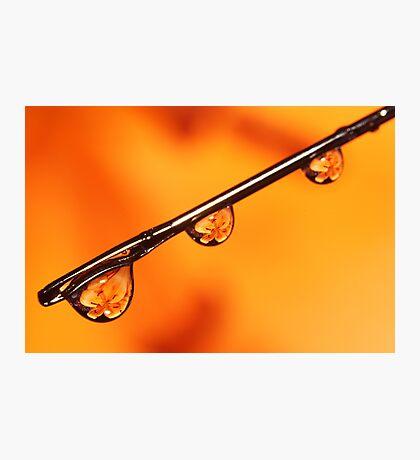Orange Water Needle Photographic Print