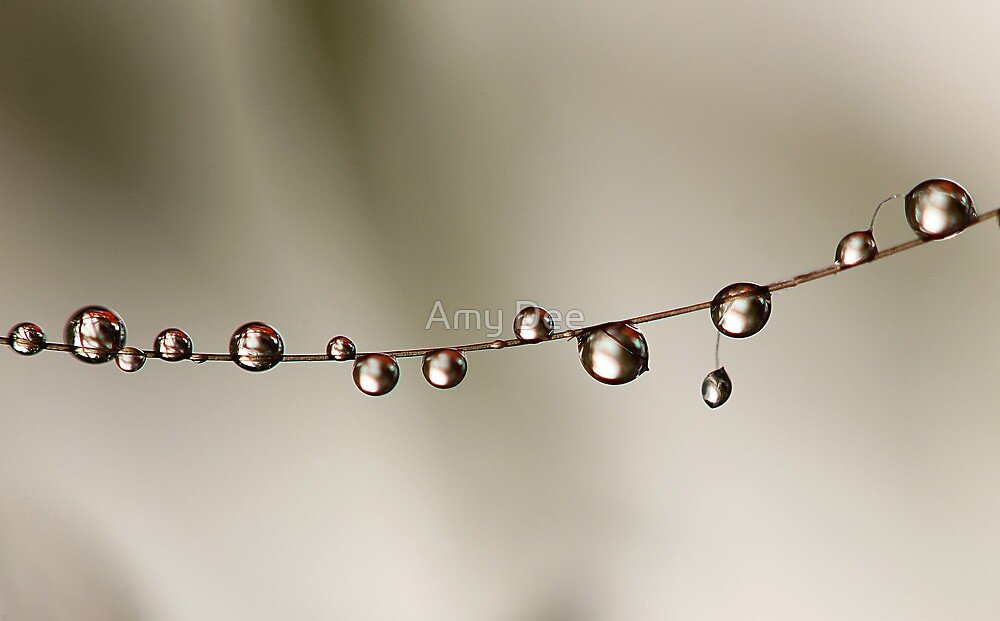 Hanging Pearls by Amy Dee