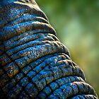The Elephant's Wrinkles by Didi Bingham