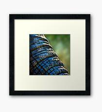 The Elephant's Wrinkles Framed Print