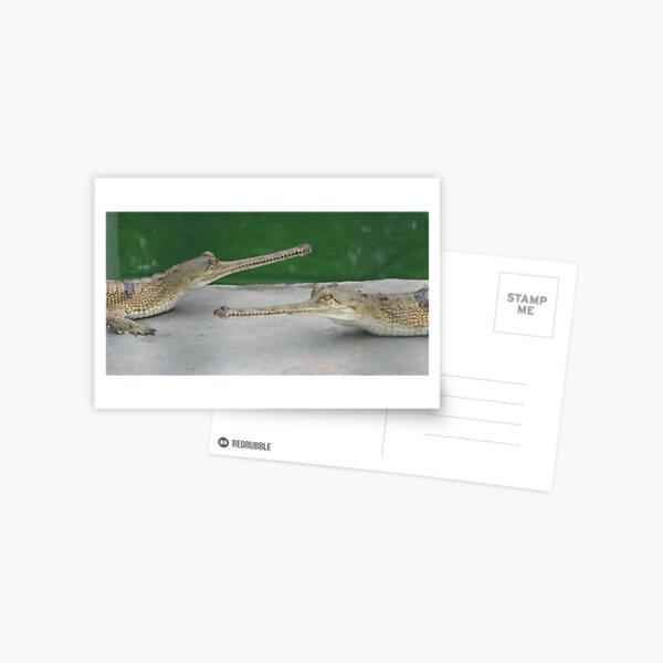 Gharials Postcard