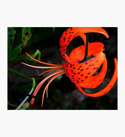 Lily !! Photographic Print
