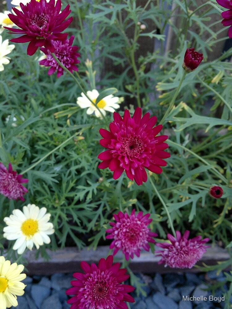 garden flowers by Michelle Boyd