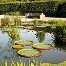 Amazon Water Lily Garden by Hank Eder