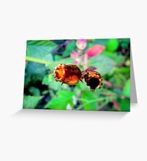 PODS. Greeting Card