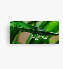 two water drops Canvas Print