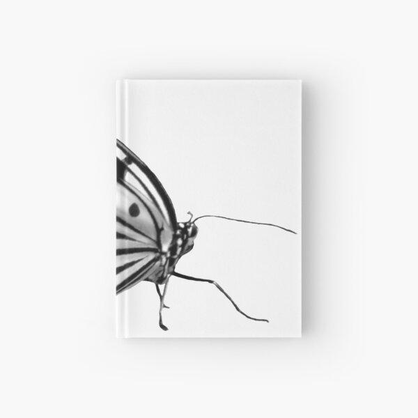 Schmetterling schwarz weiß, Natur, Insekt Notizbuch
