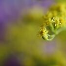 Bouquet of Yellow and Purple by Gregory L. Nance
