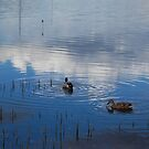 Ducks in reflection - Tascott by AmyBonnici
