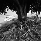 Cambodge - Kampong Cham Town by Jean-Luc Rollier