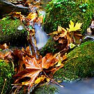 A Touch Of Fall by Charles & Patricia   Harkins ~ Picture Oregon