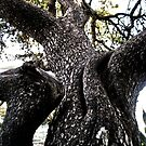Spasm of a Tree by RedFlavourArt
