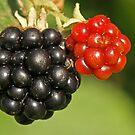 Fruity by Robert Abraham