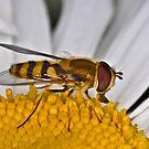 Pollination 32 by Gareth Jones