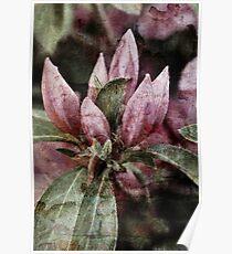 Textured Bloom Poster