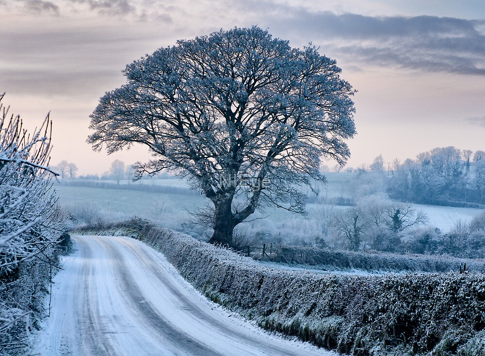 Winter in the orchard county by NIEye