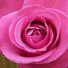 Layers of pink. by Fara