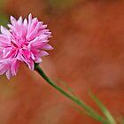 Pink Flower by Danielle Girouard