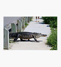 Gator Photographic Print