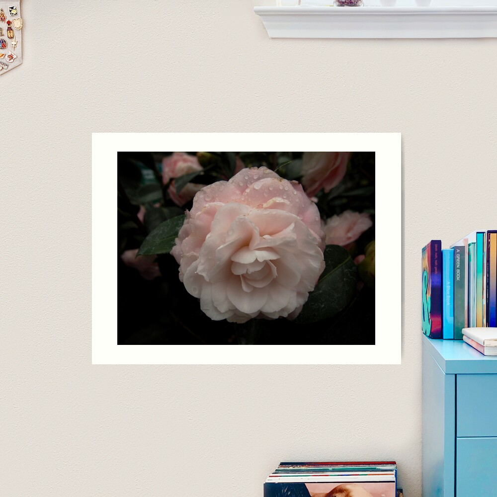 Pink Camellia with Raindrops Art Print by Douglas E. Welch