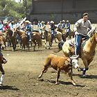 Team Roping Got the Horns by Sandra Gray