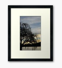 sombre willow Framed Print