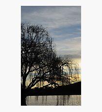 sombre willow Photographic Print