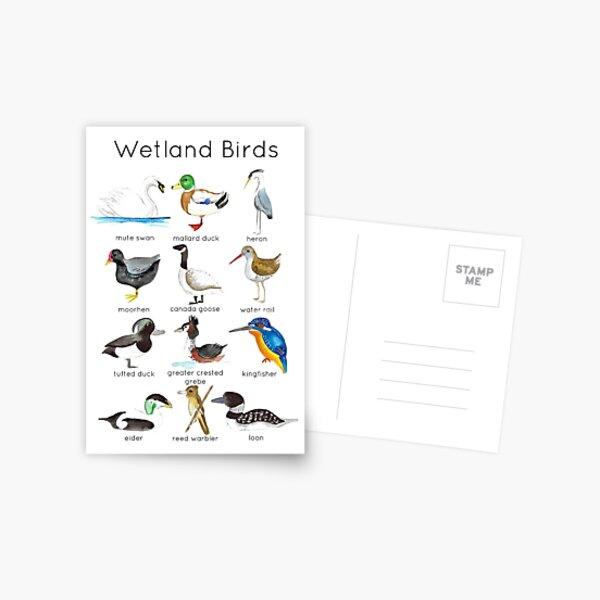 Wetland Birds ID Postcard