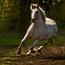 Grace in Motion by Sue Ratcliffe
