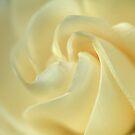 Glorious Gardenia by Sea-Change