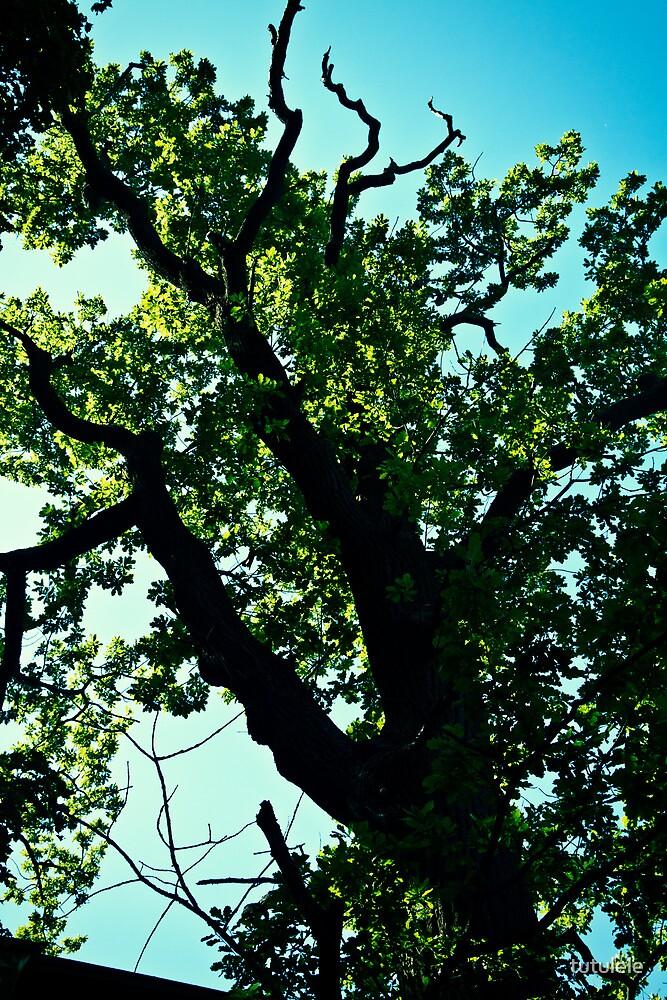 Oak Tree up in Toompea. Tallinn. by tutulele