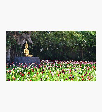 Flowers like followers Photographic Print
