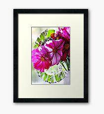 Cosmea Framed Print