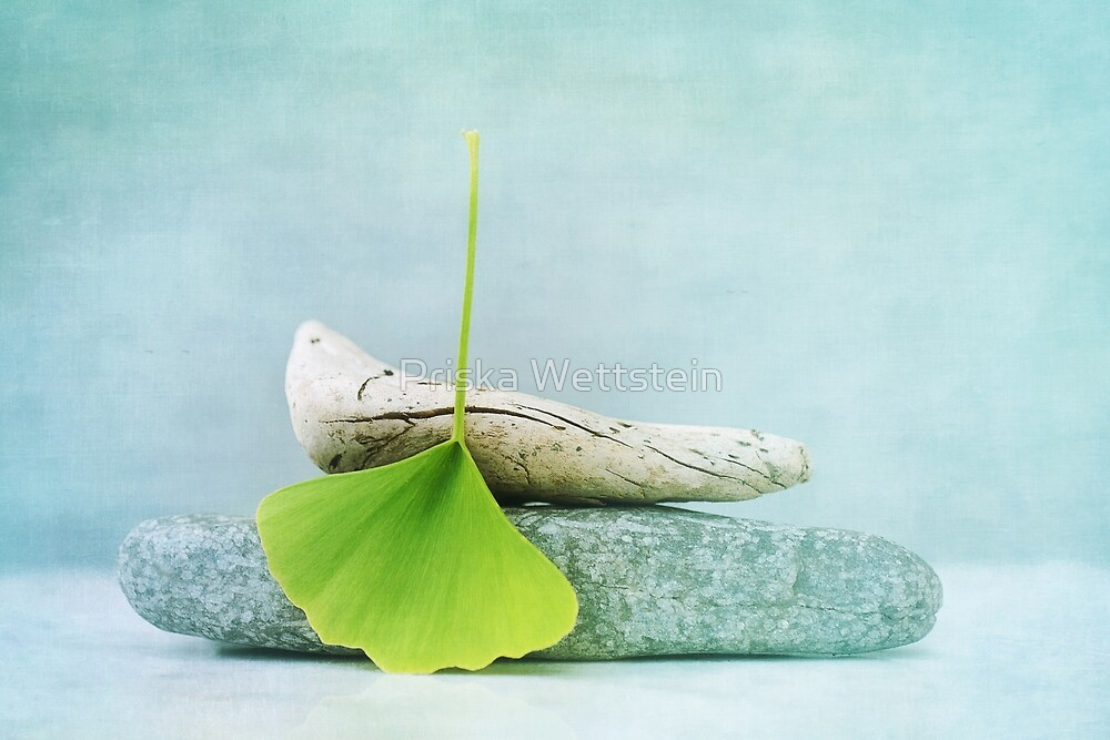 driftwood, stone and a gingko leaf by Priska Wettstein