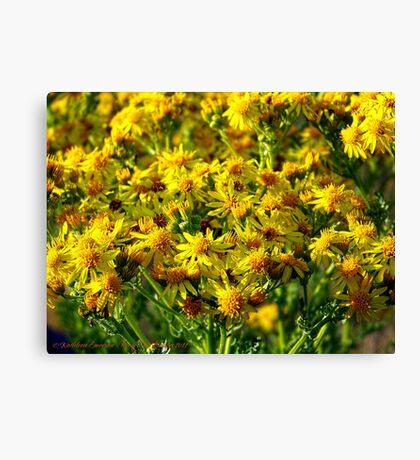Wild Sunshine (Common Ragwort, Senecioneae Jacobaea) Canvas Print
