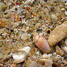 Seashell Jumble Eleven by Robert Phillips