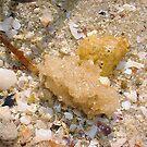 Sponge Six by Robert Phillips