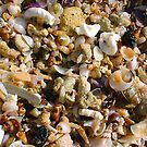 Seashell Jumble Ten by Robert Phillips