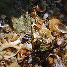 Seashell Jumble Nine by Robert Phillips