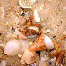 Seashell Jumble Five by Robert Phillips