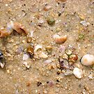 Seashell Jumble Two by Robert Phillips